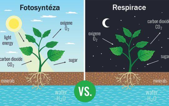 Fotosyntéza a respirace (buněčné dýchání) znázorněné dvěma malovanými obrázky na kterých je rostlina ve dne a v noci přijímající oxid uhličitý vylučující kyslík spotřebovávající cukr a minerály a vodu a podobné výměny či spotřeby, zdroj: shutterstock