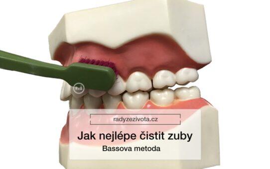 Zubní kartáček ilustrativně ukazuje Bassovu metodu na umělých zubech   Jak nejlépe čistit zuby - Bassova metoda   Rady ze života doporučují