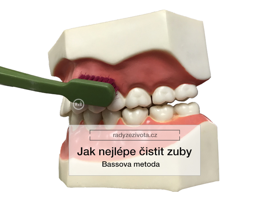 Zubní kartáček ilustrativně ukazuje Bassovu metodu na umělých zubech | Jak nejlépe čistit zuby - Bassova metoda | Rady ze života doporučují