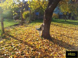 PŘED | Shrabat listí