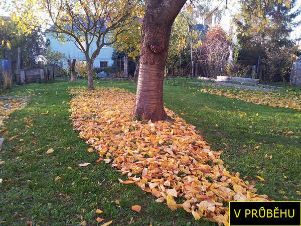 V PRŮBĚHU   Shrabat listí