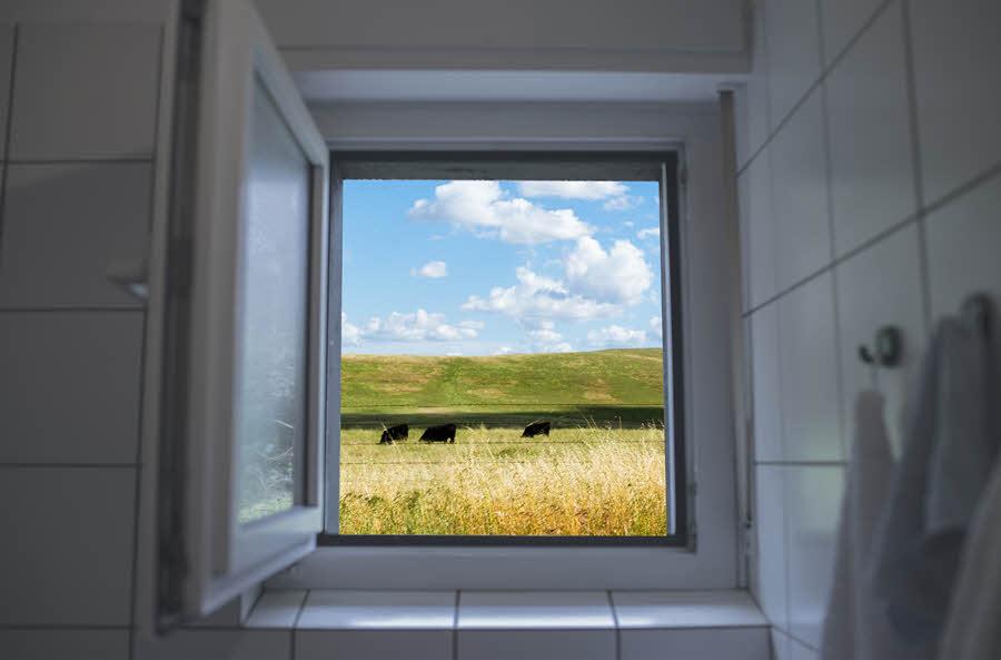 Otevřené okno v koupelně | Jak na plíseň? | Prevence | Jak se jí zbavit? | 2.díl | Udělej si sám