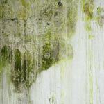 Jak na plíseň? | Prevence | Jak se jí zbavit? | 2.díl | Udělej si sám