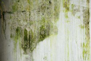 Jak na plíseň? | Jak jí předcházet a jak se jí zbavit? | Řešení | 2.díl