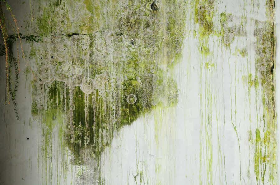 Fotografie plísně na zdi | Jak na plíseň? | Prevence | Jak se jí zbavit? | 2.díl | Udělej si sám